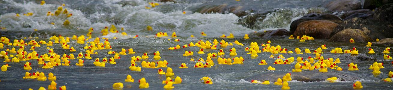 Great Rubber Duck Race